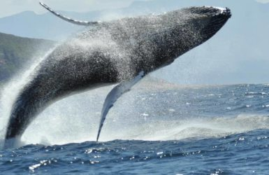 whale & dolphin watching, Plettenberg Bay